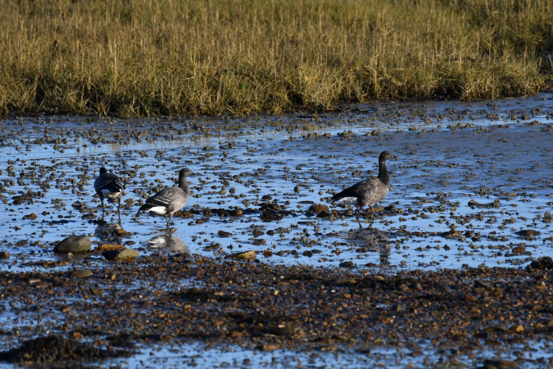 Rencontre avec les oiseaux migrateurs