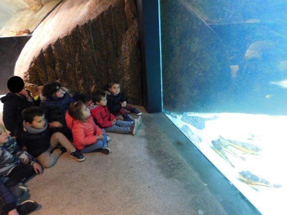 Découverte des espèces du monde sous-marin